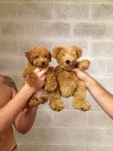 cachorro-de-caniche-peluche
