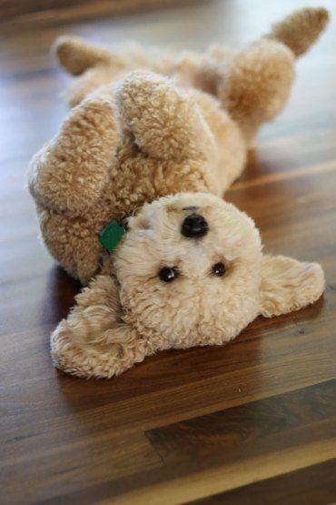 cachorro-de-goldendoodle-peluche