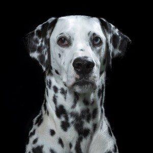 retratos animales116