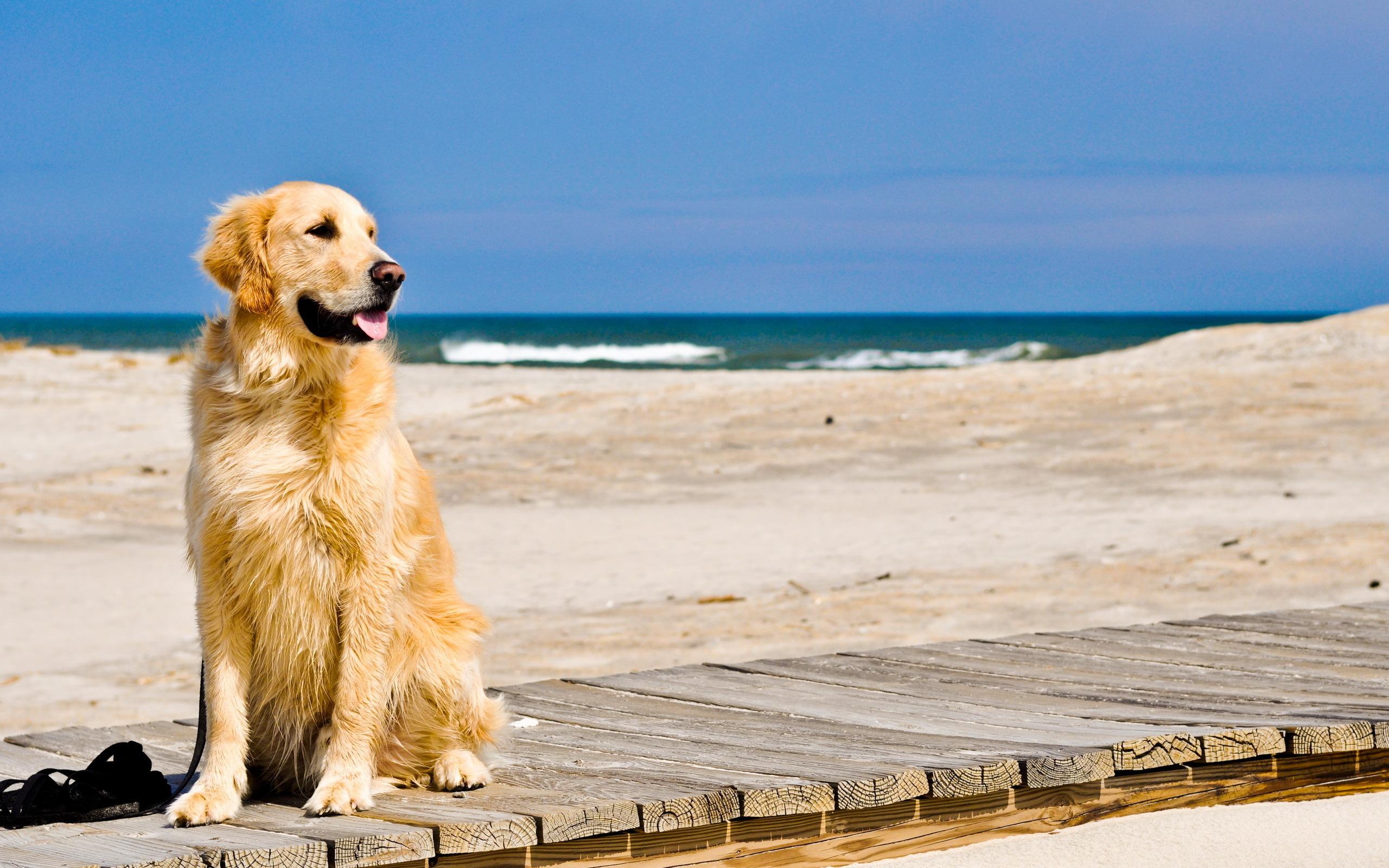 Resultado de imagen de perro en la playa