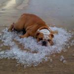 golpe de calor perro