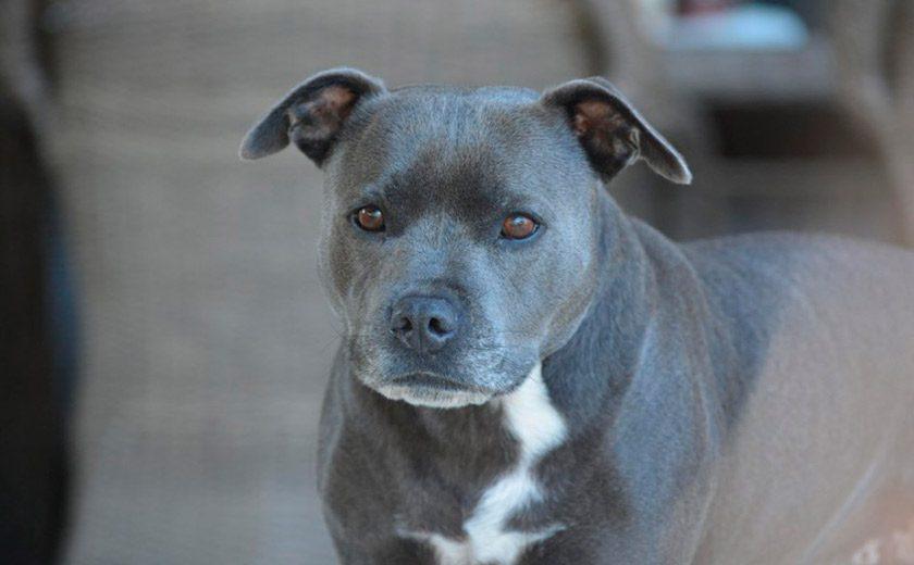 Tener un perro de raza peligrosa
