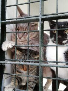 Gatos Almería Animalados