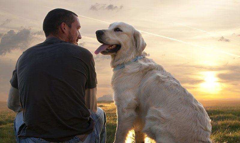Gos i humà amics Animalados