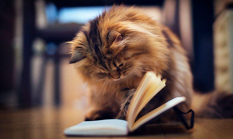 Gat llegint consells Animalados