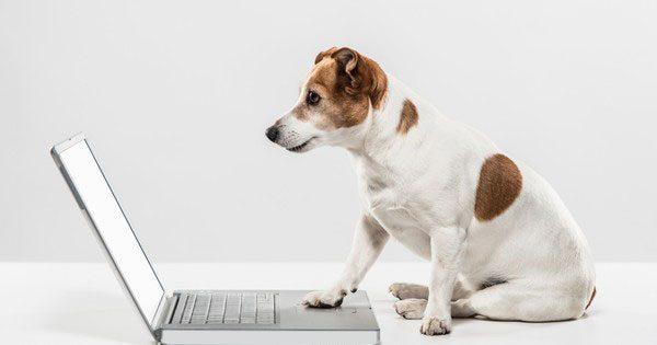 Gosset contactant amb Animalados