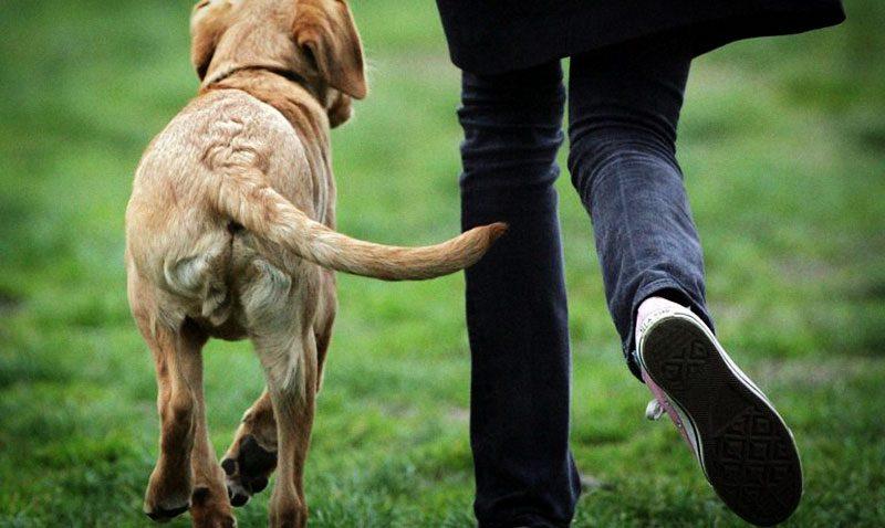 Escapa't amb el gos Animalados