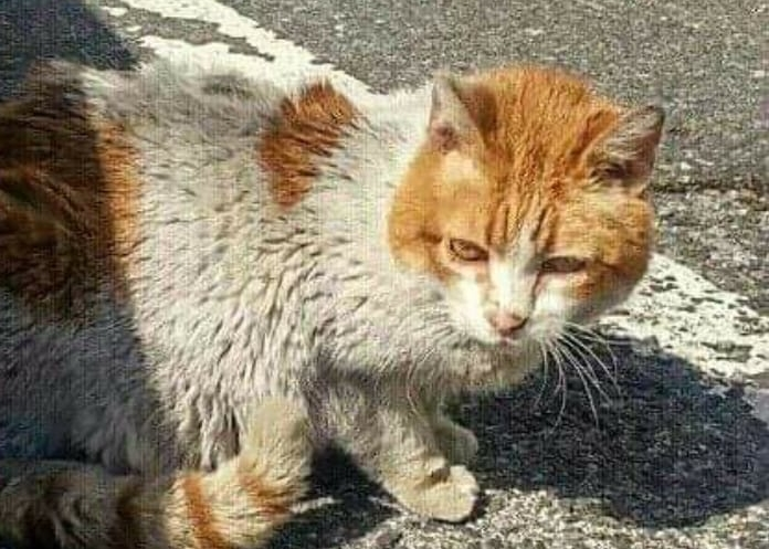 Gato de una colonia felina controlada por Katubihotz