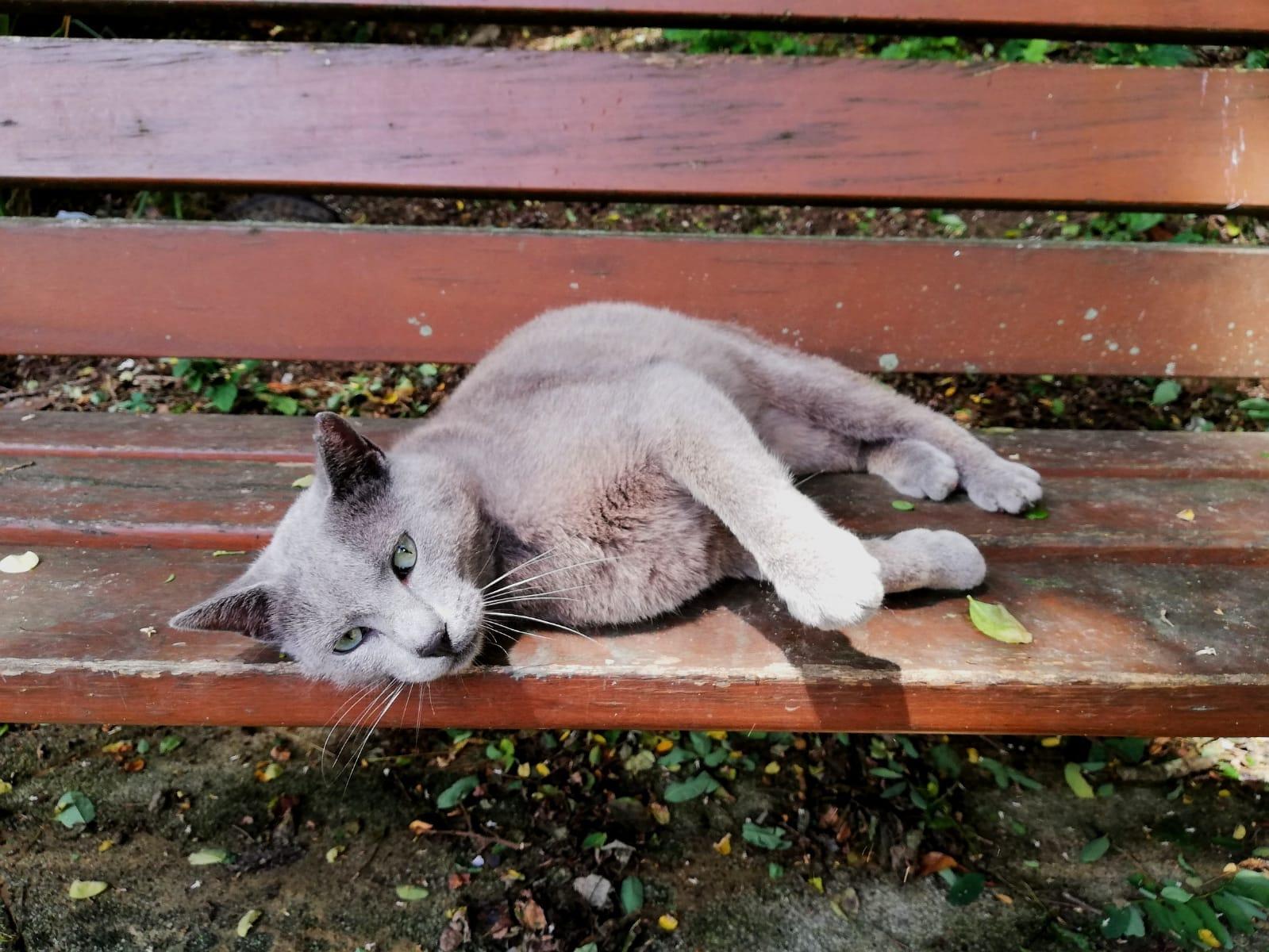 Gato feral de una colonia felina de Pasaia