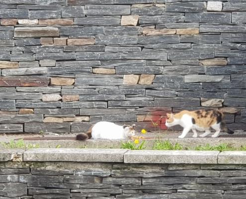 Katubihotz, colonias felinas