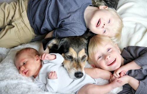 beneficis, animals de companyia