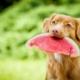 frutas, perros