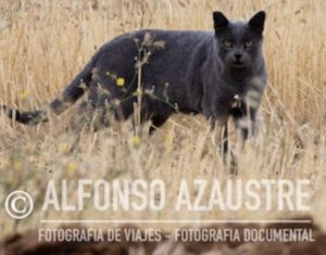 Imagen captada por el fotógrafo especializado Alfonso Azaustre