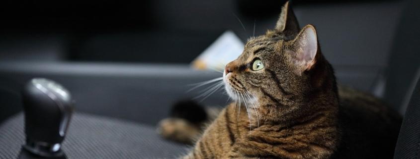 Consejos para viajar con el gato en coche