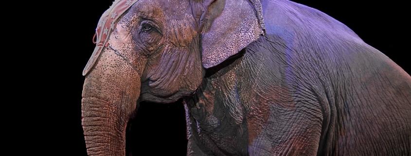 Castilla-La Mancha prohíbe los circos con animales salvajes