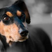 Zaragoza regula el funcionamiento del Centro Municipal de Protección Animal, que acoge 110 animales perdidos o abandonados