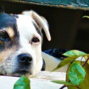 Alerten de nous casos d'enverinament d'animals al districte de Sant Andreu