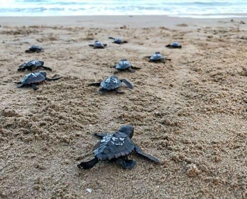 imagen de tortugas bobas Animalados